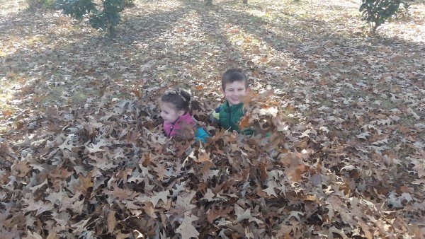 Crunching Leaves… And Numbers
